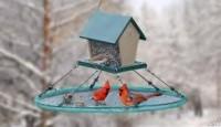 februaryattendtotheheartgratitudewithbirds