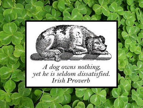 dog irish proverb for saint patty's day