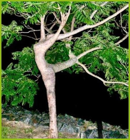 Nature Heals - Dance With Trees