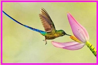 hope fly