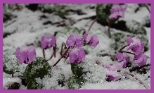 flowers in snow representing courage