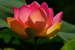 women blossom