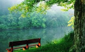 a quiet seat for viewing natures healing gifts