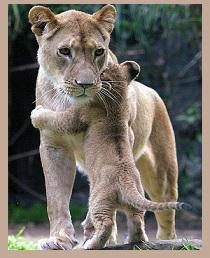 hugs are healing