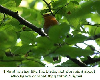 healing sounds of birds singing