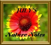 July's Gratitude Embrace nature