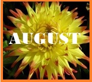 august gratitude cutlivating peace