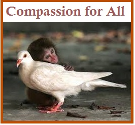 tuesday's healing word compassion