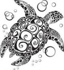 Animal Spirit Guide Turtle