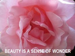 tuesday's healing word beauty
