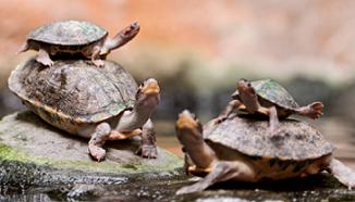 Animal Spirit Guides Turtles