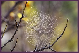 Nature's Healing Gift Spider Web