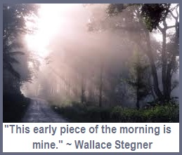 Nature's Healing Gift Morning Misty Magice