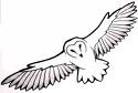 spirit animal guide barn owl