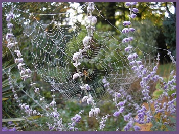 Nature's Healing Gifts Spider Webs
