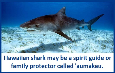 Animal Spirit Guides Shark