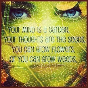 the emotional power of seedthoughts