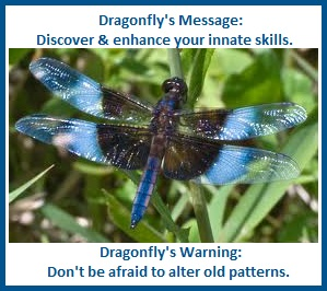 animal spirit guide-dragonfly