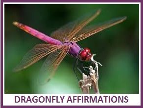 animal spirit guide dragonfly