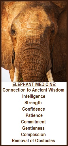 animal spirit guide elephant