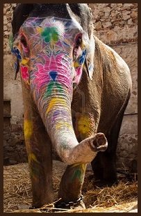 animal spirit quide - elephant