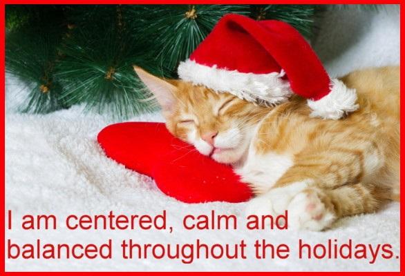 Kitten sleeping in New Year