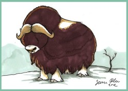 Animal Spirit Guide Musk Ox