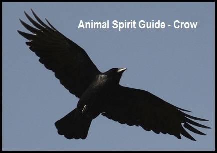how to find spirit guide animal
