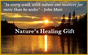 Nature's healing Gift-A Quiet Walk
