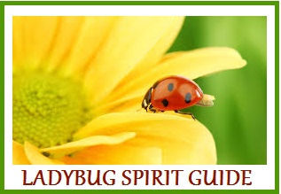 Animal Spirit Guide -Ladybug