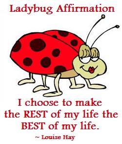 Spirit Animal Guide - Ladybug