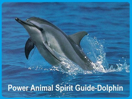 Animal Spirit Guide-Dolphin