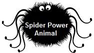 Spider Spirit Animal