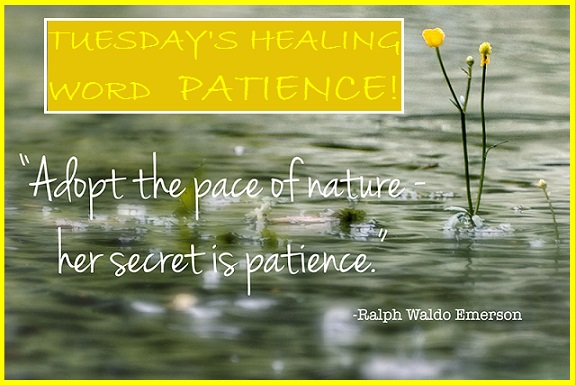 Tuesday's Healing Word - Patience