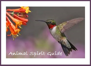 Animal Spirit Guide Hummingbird