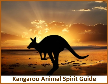 Kangaroo Animal Spirit Guide