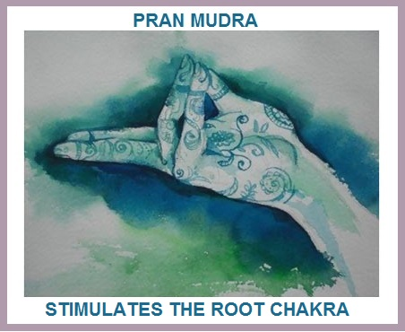 Pran Mudra Stimulates Root Chakra