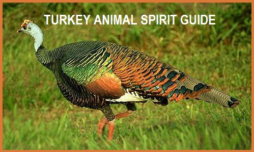Spirit Animal Guide - Turkey