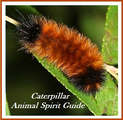 Animal Spirit Guide - Caterpiller