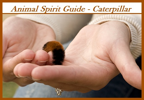 Animal Spirit Guide - Caterpillar