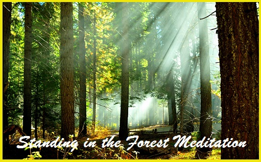 Standing In The Forest Mediation