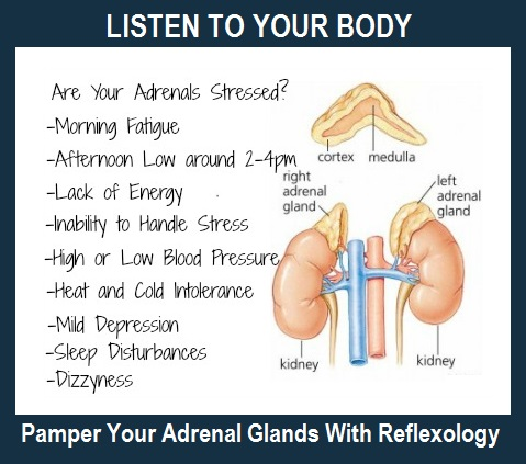 Reflexology for Adrenal Glands