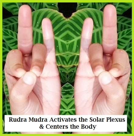 Ruda Mudra for Solar Plexus & More