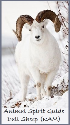 Animal Spirit Guide-DallSheep (RAM)