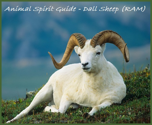 Animal Spirit Guide-Dall Sheep (RAM)