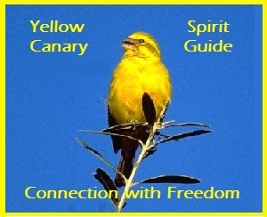 Animal Spirit Guide Yellow Canary