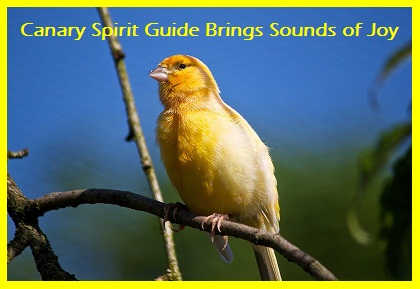 Animal Spirit Guide Yellow Canary
