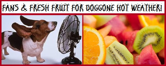 Tips For Doggone Hot Weather