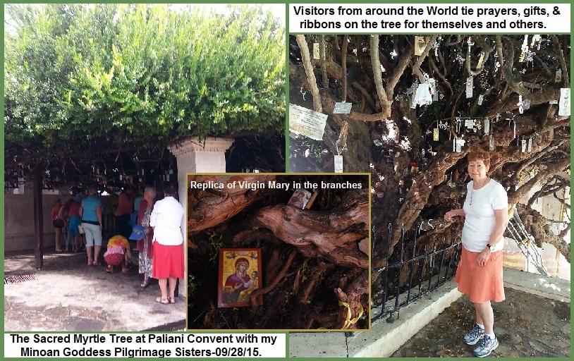 Myrtle tree 1-4