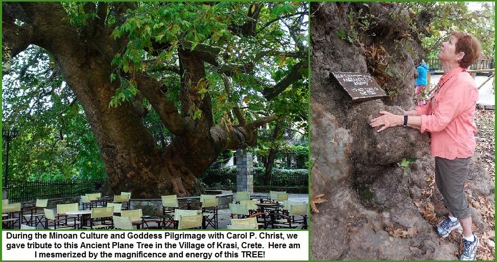 kRASI TREE 4-2